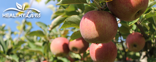 Fall fruit trees our healthy lives - Planting fruit trees in autumn ...